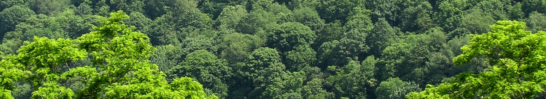 forest canopy header
