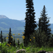 tetons_view_crop